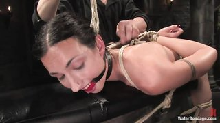 Situation familiar over 1000 bdsm videos valuable information